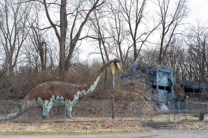 Prehistoric Forest - FROM THE WEB